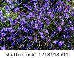 blue trailing lobelia sapphire... | Shutterstock . vector #1218148504