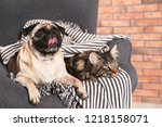 Stock photo cute cat and pug dog with blanket in armchair at home cozy winter 1218158071