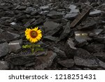 sunflower growing on a pile of... | Shutterstock . vector #1218251431