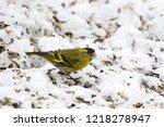 male eurasian siskin bird ... | Shutterstock . vector #1218278947