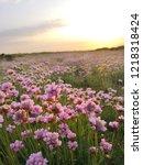 Sea Pi. K Flowers At Stokes Bay ...