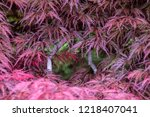 leaves an branches of inaba...   Shutterstock . vector #1218407041