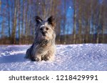 small shaggy dog sitting on a...   Shutterstock . vector #1218429991