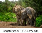 elephants playing in the mud... | Shutterstock . vector #1218592531