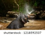 elephants relaxing and enjoying ... | Shutterstock . vector #1218592537