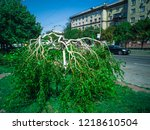 minotaur weeping willow tree....   Shutterstock . vector #1218610504