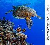 Red sea diving big sea turtle swimming over colorful coral reef full of fishes - stock photo