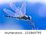 Dragonfly On Blue Background