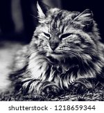 fluffy cat  portrait  black and ... | Shutterstock . vector #1218659344