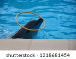 dolphin  in the pool playing... | Shutterstock . vector #1218681454