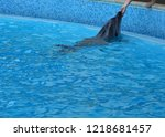 cute dolphin with human hands... | Shutterstock . vector #1218681457