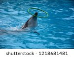 dolphin playing with the green  ... | Shutterstock . vector #1218681481