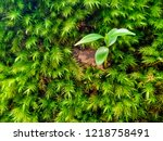 small tree on the green fern... | Shutterstock . vector #1218758491