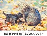 mother cat with little kitten... | Shutterstock . vector #1218770047