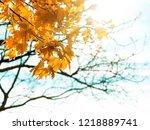 autumn park. beautiful yellow... | Shutterstock . vector #1218889741