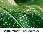 a banana palm leaf after the... | Shutterstock . vector #1219006027