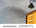 large flock of starlings fly... | Shutterstock . vector #1219057771