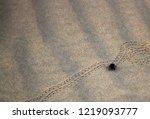black beetles  darkling beetles ... | Shutterstock . vector #1219093777