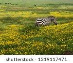 cute african zebra standing in... | Shutterstock . vector #1219117471