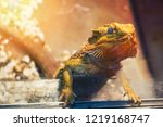 lizard in natural habitat.... | Shutterstock . vector #1219168747