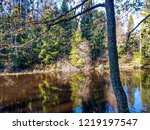 autumn forest river trees...   Shutterstock . vector #1219197547