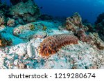 sea cucumber on a sandy seabed... | Shutterstock . vector #1219280674
