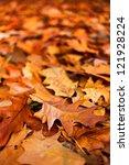 Macro Of A Bed Of Fallen Oak...