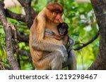 wild mother and baby proboscis... | Shutterstock . vector #1219298467