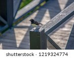 Small photo of Willie wagtail on a fence post