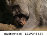 baby ape gets protected by... | Shutterstock . vector #1219345684