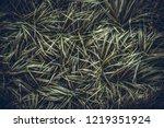 creative layout made of green...   Shutterstock . vector #1219351924