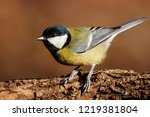 great tit sitting on branch of... | Shutterstock . vector #1219381804