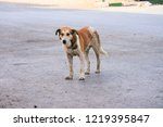 Stock photo homless dog on the street 1219395847