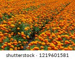 field of growing bright orange... | Shutterstock . vector #1219601581