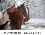 two horses in a snow blizzard | Shutterstock . vector #1219617757