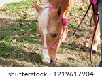 beautiful horse in a pink rope... | Shutterstock . vector #1219617904