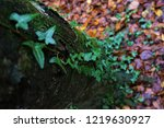 beautiful beech forest in... | Shutterstock . vector #1219630927