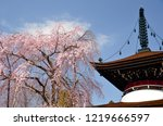 a weeping cherry tree and a...   Shutterstock . vector #1219666597