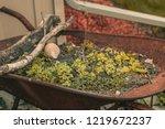 reclaimed wheel barrow filled... | Shutterstock . vector #1219672237