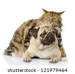 Stock photo the cat hugs a dog isolated on white background 121979464