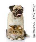 Stock photo the dog embraces a cat isolated on white background 121979467