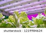organic hydroponic vegetable... | Shutterstock . vector #1219984624