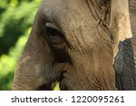 elephant eye close up. big... | Shutterstock . vector #1220095261