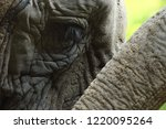elephant eye close up. big... | Shutterstock . vector #1220095264