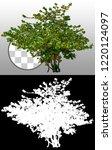 shrub. green tree isolated on... | Shutterstock . vector #1220124097