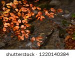colored beech leaves during the ... | Shutterstock . vector #1220140384