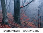 autumn rainy and foggy forest | Shutterstock . vector #1220249587