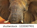 closeup of adult african... | Shutterstock . vector #1220307901