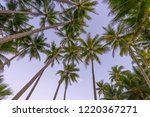 tropical palm trees at palm... | Shutterstock . vector #1220367271