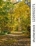 golden fall. norway maple  acer ... | Shutterstock . vector #1220502271
